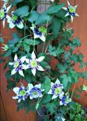 2012-05-16_11-11-43_HDR.jpg