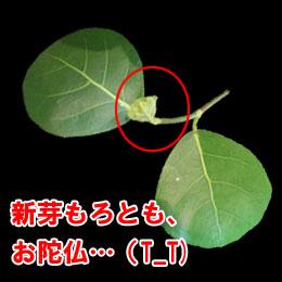 guri_20130424214352.jpg