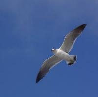 飛ぶ鳥(トリミング)★小 200