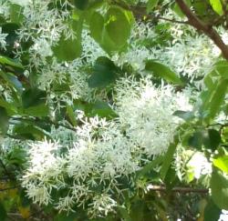 白い花DSC_0735★小 250