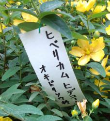DSC_0848★小 250
