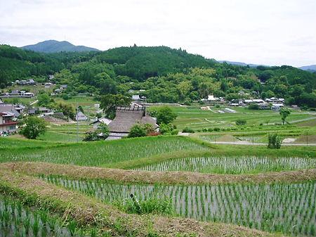 長谷の棚田
