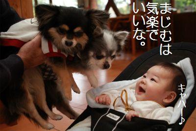 IMG_0895_20141201222702bd2.jpg