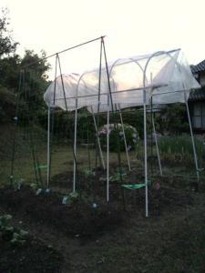 20120506きゅうりの苗トマトの苗を植えました。