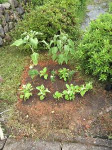 20120701花壇黄色の花
