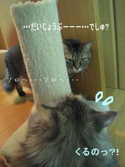 20130513-10.jpg