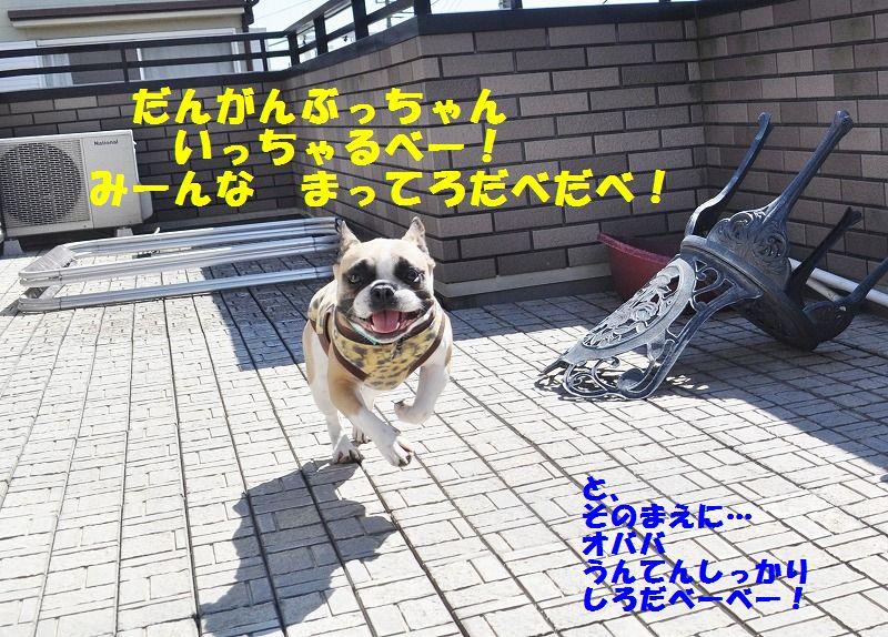 010_20130510163339.jpg