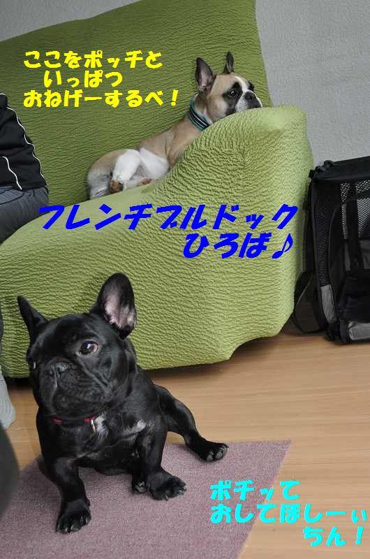 017_20130603102618.jpg