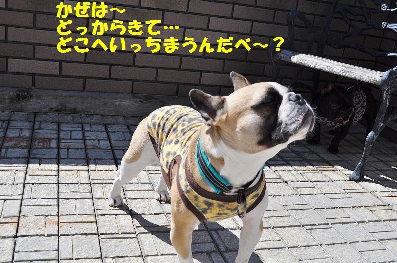 024_20130408150245.jpg