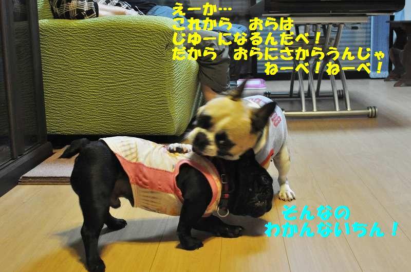 029_20130531144417.jpg