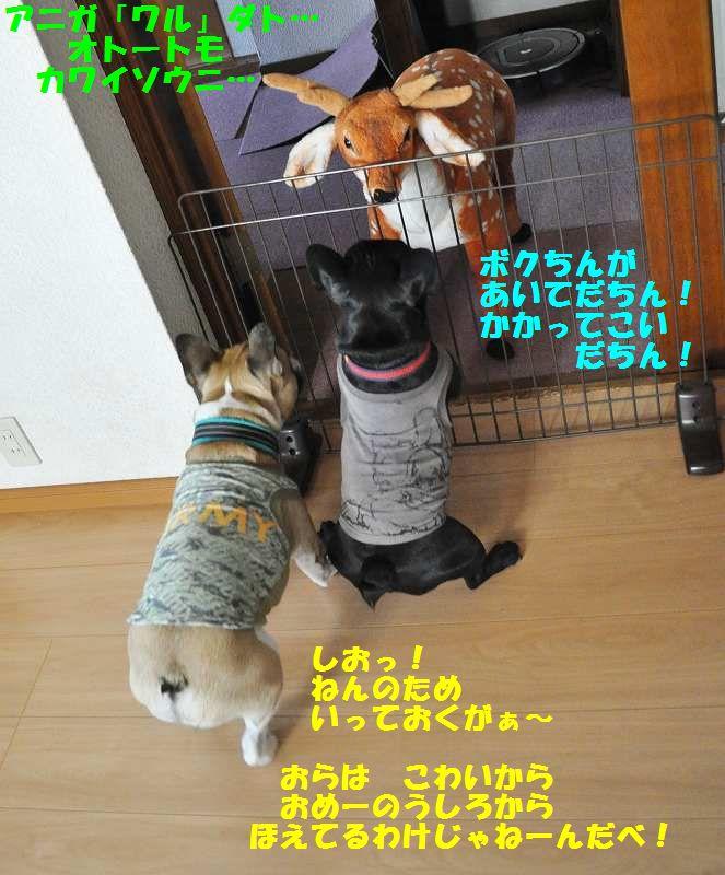 040_20130604155619.jpg