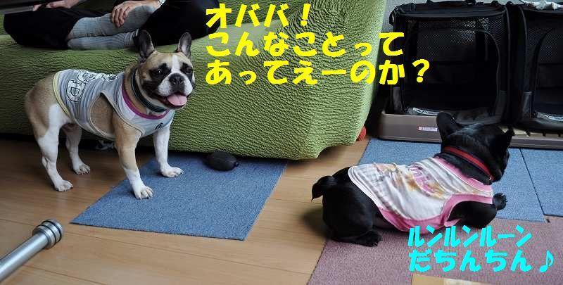 040_20130706134300.jpg