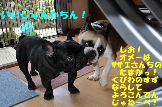 047_20130626155511.jpg