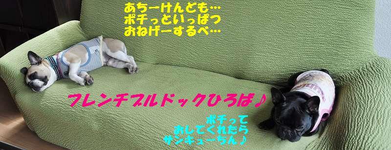 051_20130701110329.jpg