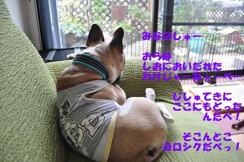 059_20130703154453.jpg