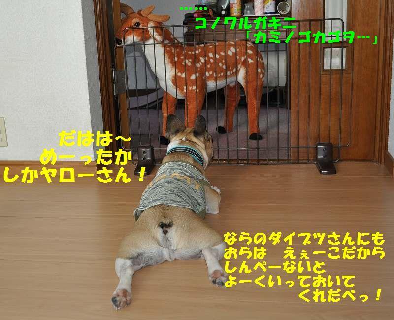 073_20130605143845.jpg