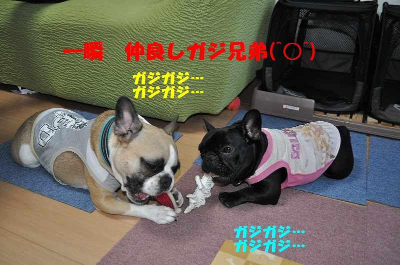 127_20130708085852.jpg
