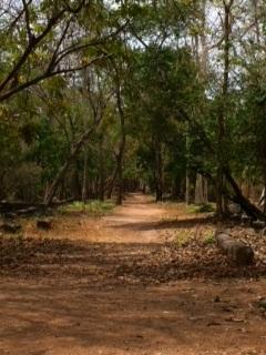 ベンメリアの森