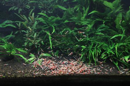 shrimp1210.jpg