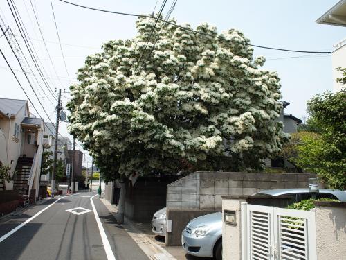 2013☆春の花たち