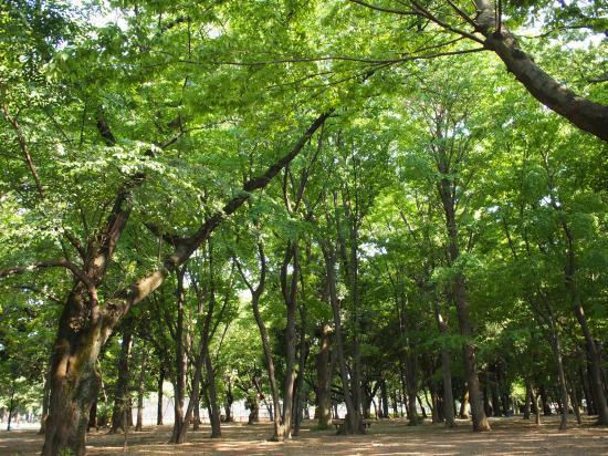5月5日☆砧公園へ行②