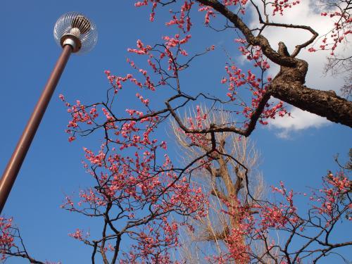梅の花巡り