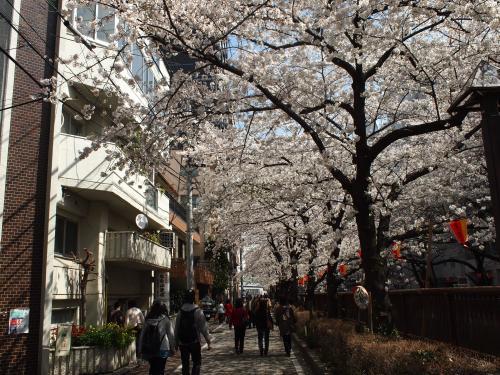 目黒川桜並木。