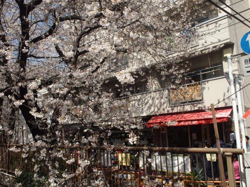目黒川桜並木