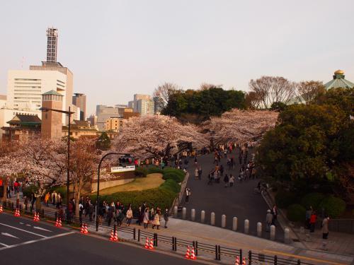 3月21日☆武道館前のお堀の桜