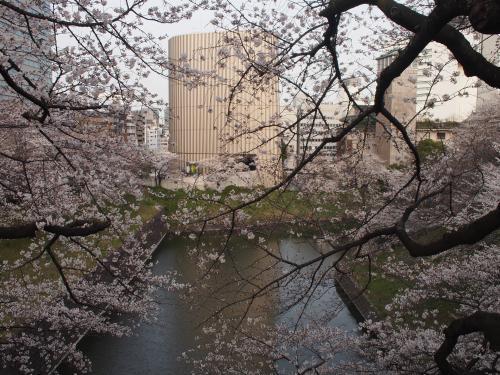 3月22日☆武道館前のお堀の桜