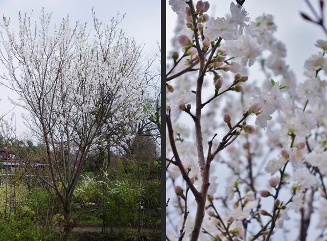 2013-04-05 2013-04-05 002 129-horz