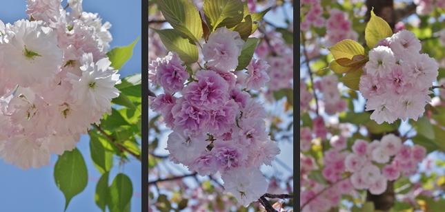 2013-04-28 2013-04-28 001 018-horz