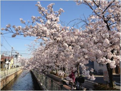 桜250405_01