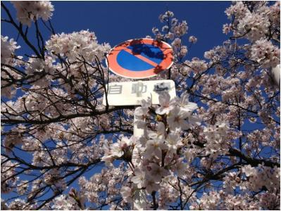 桜250405_03