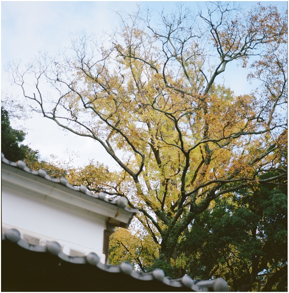 mamiya6-75mm--2014-12-1--静岡-portra400-2301420023_R