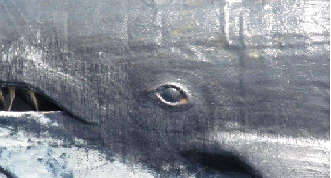 昔の漁師さんたちは鯨の涙をみて、心を痛めたという……