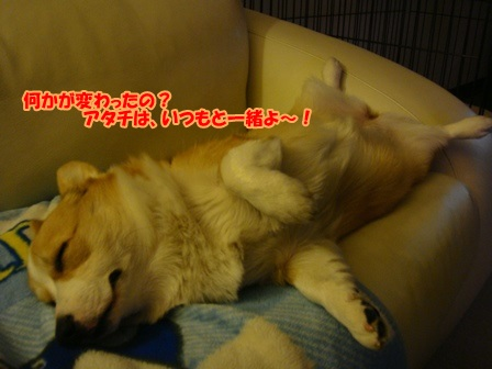 眠いわよ~