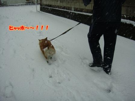 初めての雪散歩