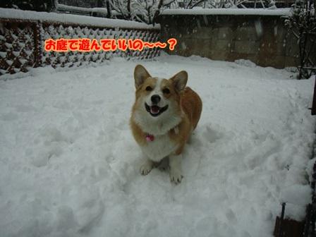 雪って楽しい!1