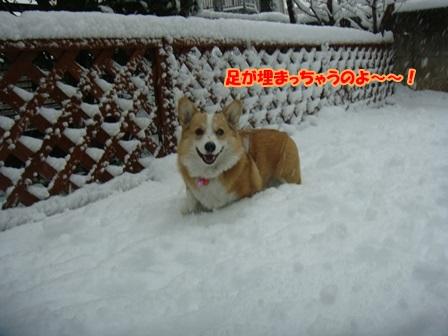 雪って楽しい!2