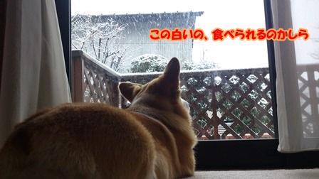 窓から外を眺める
