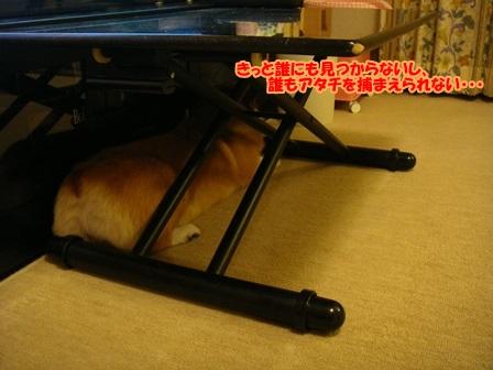 実はテーブルの下