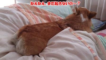 至福の添い寝2