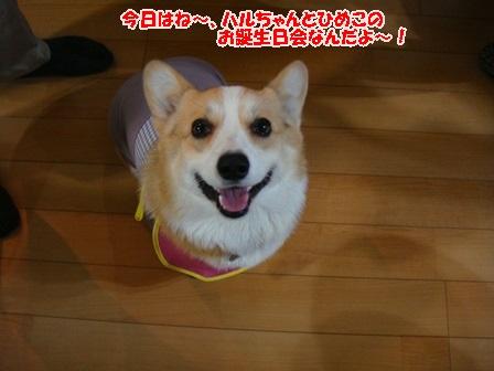 アタチのごはん!!.
