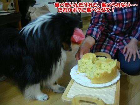 チビキのケーキ