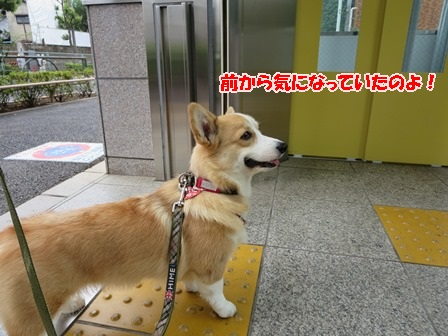 エレベーター1