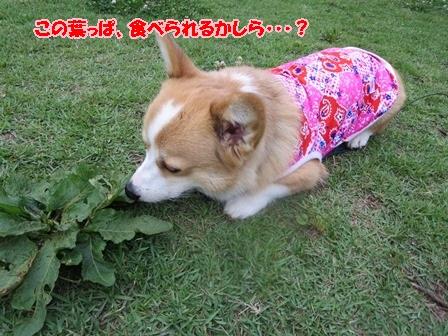 この葉っぱ食べれらる?