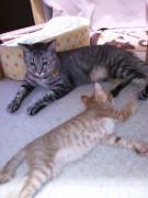 お姉さん猫と一緒に