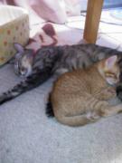 お姉さん猫と仲良し