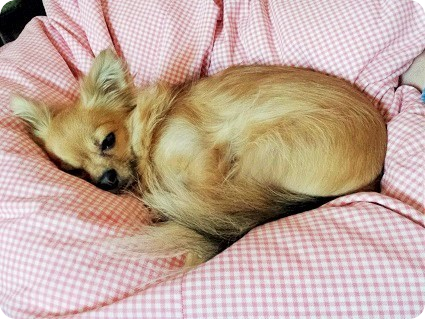 チョロ太の居眠り